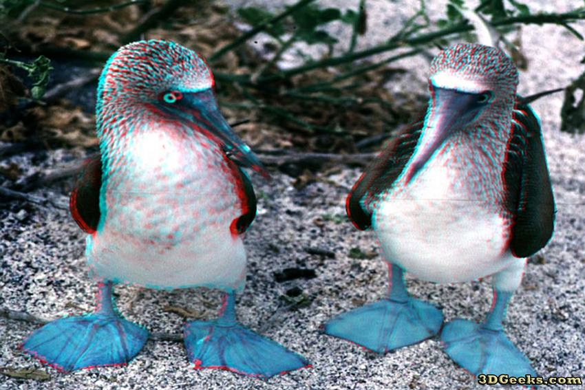 Boobie bird digital art by john huneck